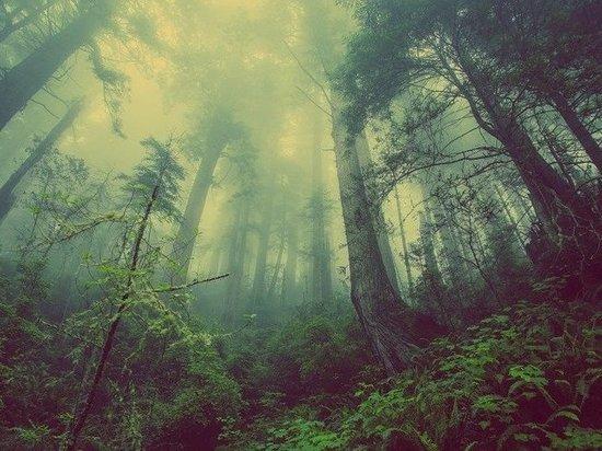 Еще один кузбассовец найден погибшим в лесу