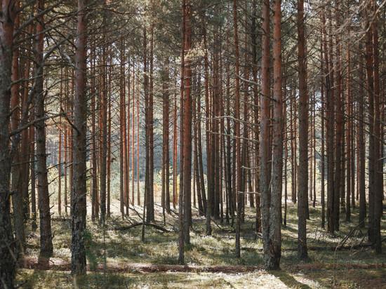Заблудившегося в лесу мужчину разыскивают Порховском районе