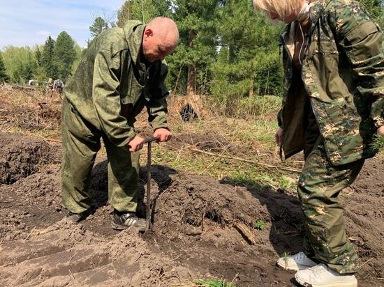 В Томской области вырастят миллион деревьев взамен сгоревшей в Якутии тайги