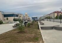 Семь елей высадили на площади в Салехарде