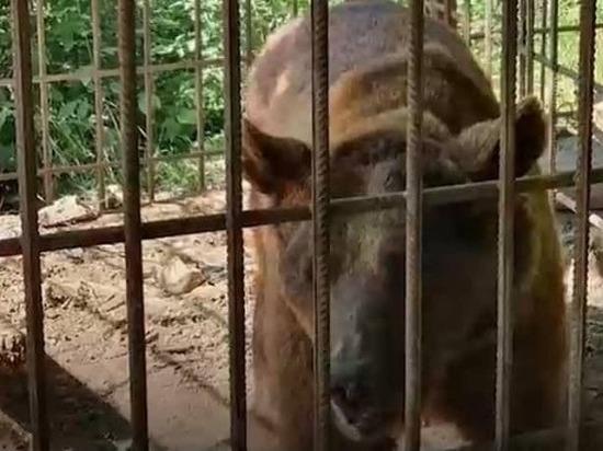 В Дагестане бурого медведя держали в клетке и застрелили