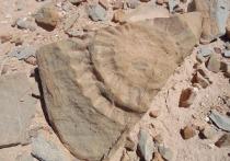 Ученые обнаружили в Чили доисторические останки «летающего дракона»