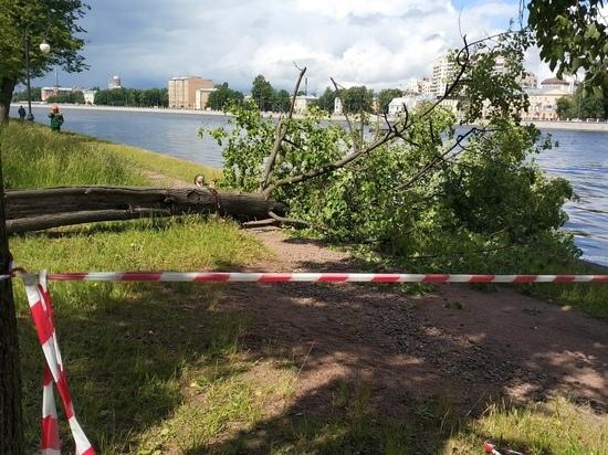 Штормовой ветер не пустил петербуржцев в парки и сады