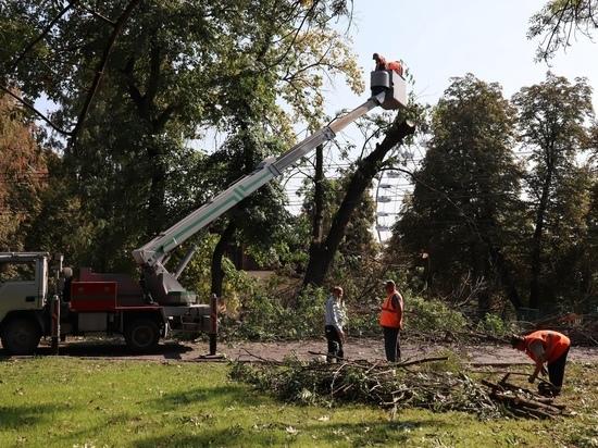 В Первомайском парке Курска ликвидируют 12 аварийных деревьев