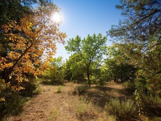 Волгоградцам обещают 14 сентября теплую и солнечную погоду до +27