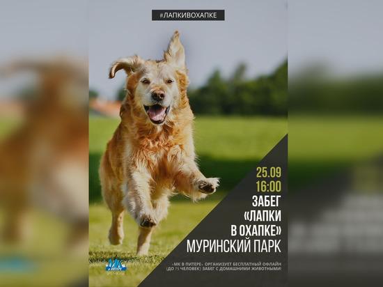 «МК в Питере» проведет забег с домашними животными «Лапки в охапке»