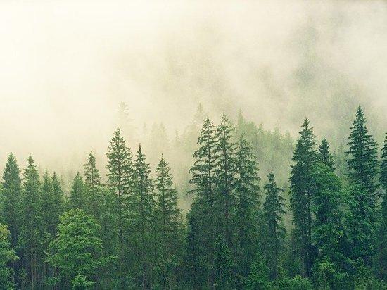 70 человек пропали в кузбасских лесах за три дня