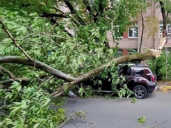 В Петербурге подсчитали поваленные ветром деревья