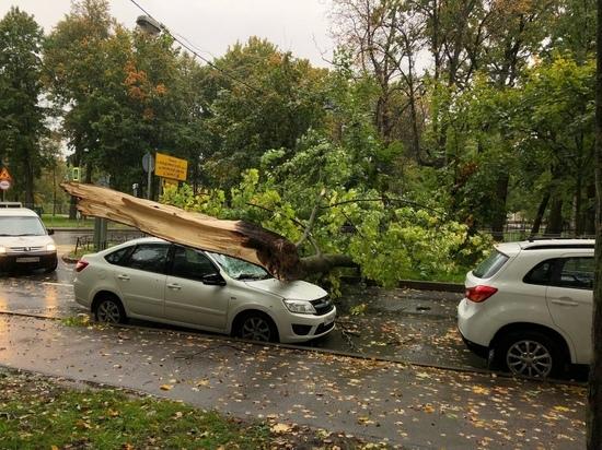 Погребенные машины, вырванные деревья и «приунывшие» светофоры: как шторм прошелся по Петербургу