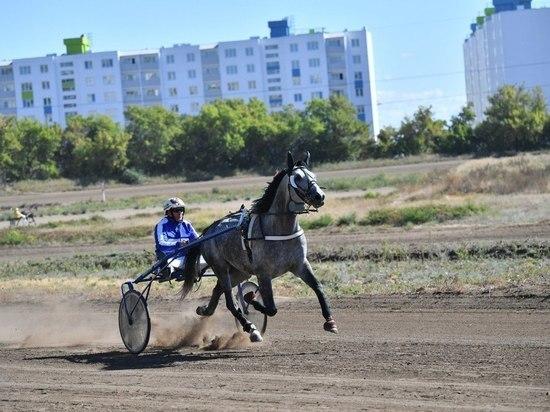 Жеребец Буревестник взял Кубок губернатора Саратовской области