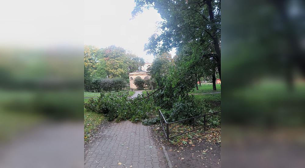 Шторм в Петербурге повалил деревья, раскидал дорожные знаки и повредил машины