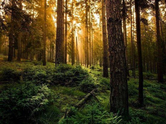 Экологи воссоздали один из древнейших лесов Земли