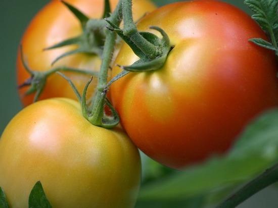 Калужская область вошла в Топ-10 лучших регионов РФ по сбору овощей