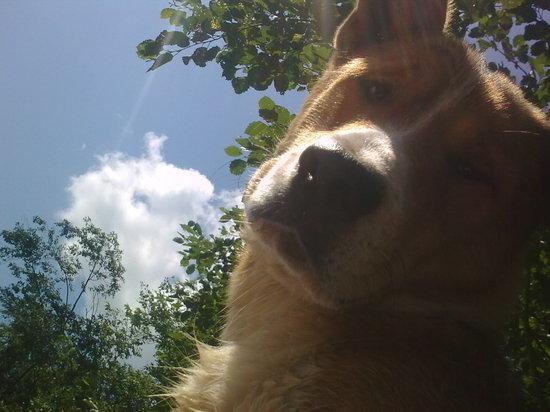 В 2020 году полномочия по обращению с бездомными собаками передали областной ветеринарной службе