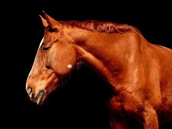 Житель Подмосковья судится с хозяином собаки из-за умершего коня