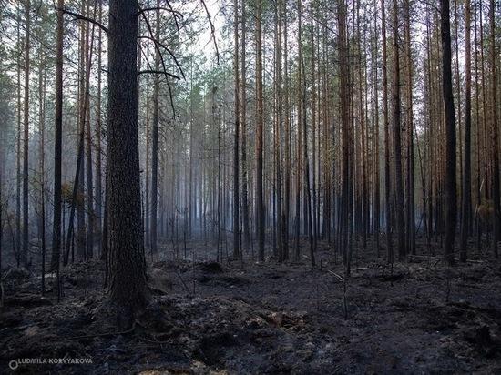 Лесопатологи обследуют повреждённые пожарами леса в Карелии