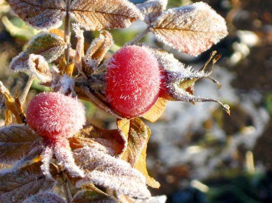 В Ленобласти к 17 сентября ожидаются заморозки