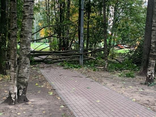 Шторм в Петербурге удвоил количество «жертв» среди деревьев