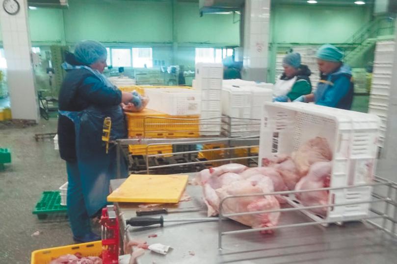 Сотрудница птицефабрики, где запретили работать сидя, обратилась в Кремль