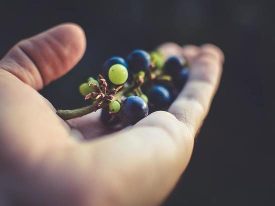 В Курской области виноград подешевел почти на 54 рубля