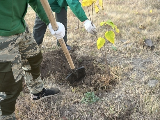 В Курске до конца октября подрядчик заменит засохшие саженцы деревьев на трех улицах
