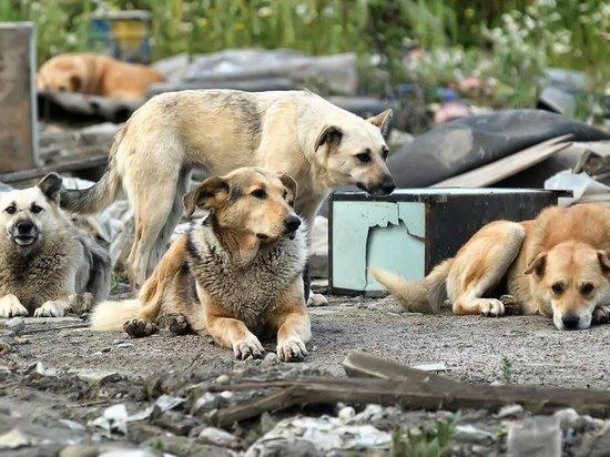 В округе поселка Дукат Омсукчанского района жители насчитали 70 бродячих собак
