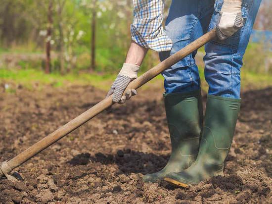 Забайкалец вырастил на своем участке 950 кустов конопли, его будут судить