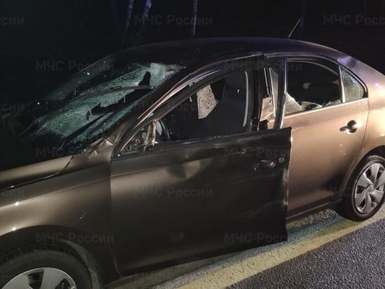 Под Калугой водитель на ночной трассе сбил лося