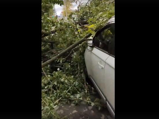 Автомобилисты пожаловались на «деревопад» во дворах Петербурга