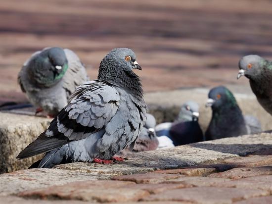 Голуби «захватили» прилавок на кемеровском рынке