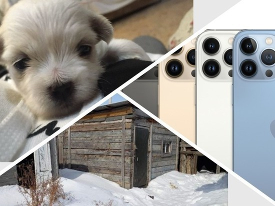 Дом, Volvo, щенок мальтезе или отдых в ОАЭ: что можно купить в Омске по цене iPhone 13