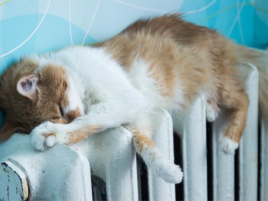 Грядущие заморозки вынудили чиновников снабдить Новгород теплом на четыре дня раньше