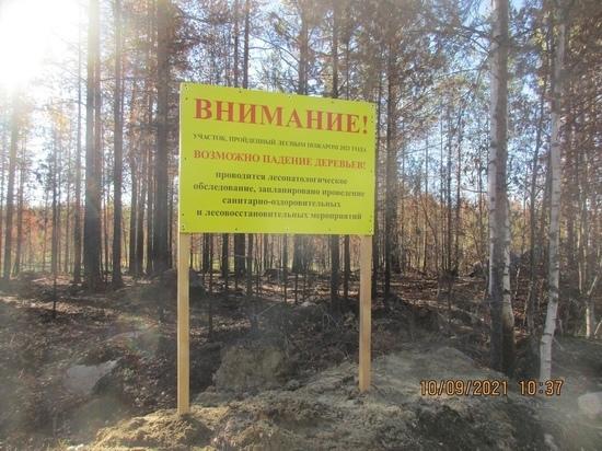 Минприроды Карелии просит не посещать сгоревшие леса