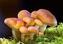 Предостеречь москвичей, собирающих грибы в столичных парках, поспешили специалисты
