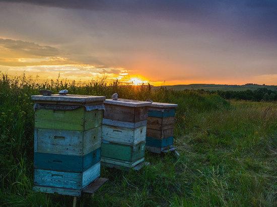 В Курской области суд взыскал с ЗАО «Касторное Агроинвест» почти 5 млн рублей за гибель пчел