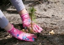 В Марий Эл сажают деревья для восстановления погибшего в пожарах леса