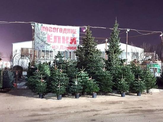 Купить живую новогоднюю елку в Интернет магазине Elki1.ru – это здорово