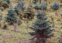 Бизнесмен в Качугском районе по суду восстановит 322 га леса