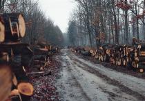 В Минприроды Хакасии рассказали о борьбе с незаконными рубками леса