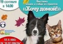 «Хочу домой»: благотворительная акция для животных из приютов пройдет в Лабытнанги