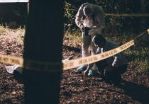 В лесу у Кайкино найдены останки мужчины с полотенцем и гелем для бритья