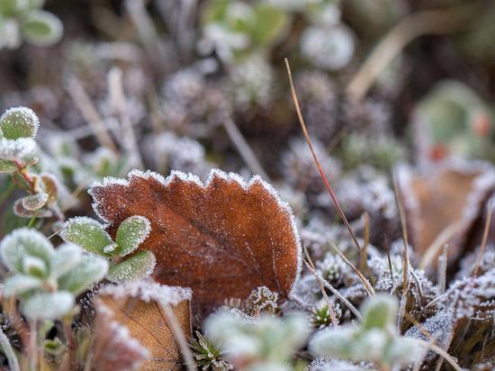Курские синоптики обещают 17 сентября дожди и первые заморозки