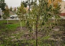 158 первых в городе яблонь высадили в Ноябрьске