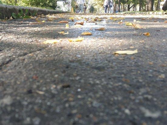 Ранее сообщалось, что Амурский и Уссурийский бульвары собираются реконструировать
