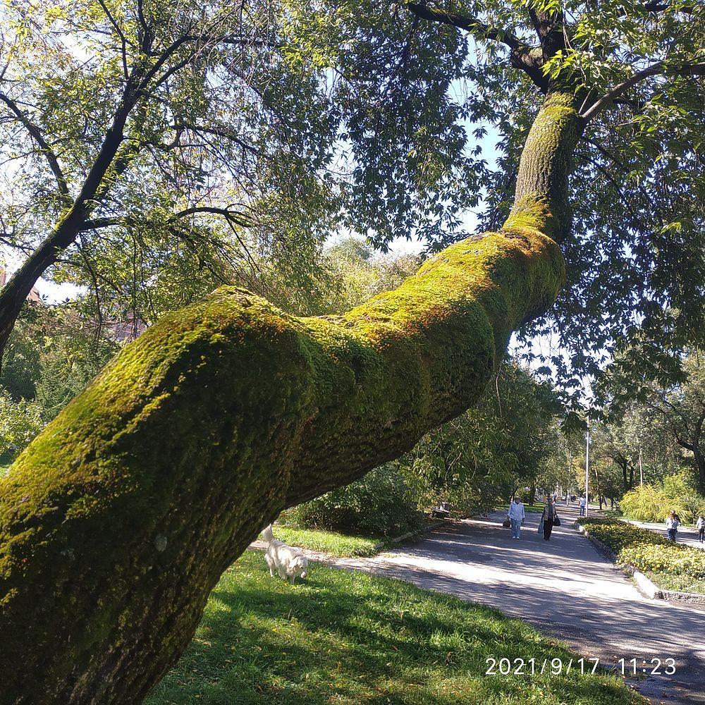 «Обратная сторона Хабаровска» искала, на что посмотреть на Амурском бульваре