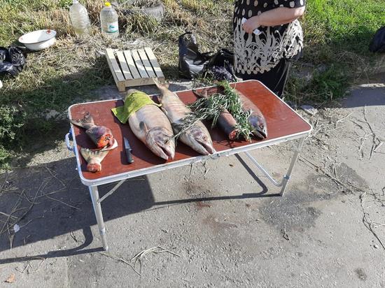 В Хабаровске выявили уличного торговца подозрительной рыбой