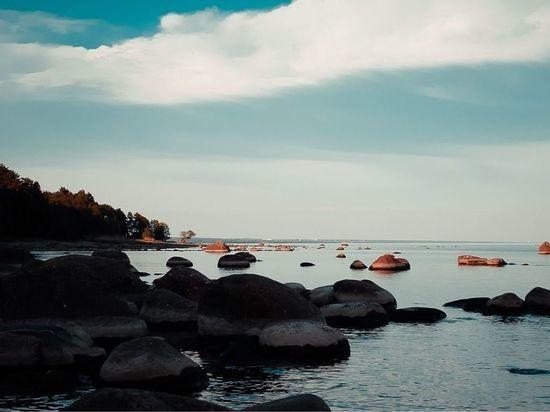 Студенты Высшей школы менеджмента СПбГУ будут жить с видом на Финский залив