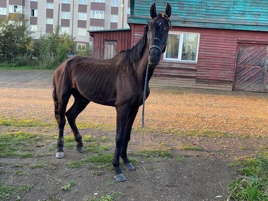 Украденный на Сахалине конь сбежал от похитителей