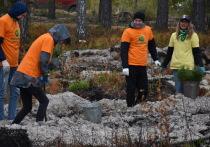 В Марий Эл за день высадили 30 000 сеянцев сосны