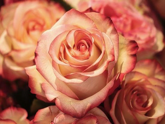 Более 1000 кенийских роз и голландских гвоздик уничтожат в Псковской области